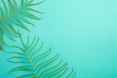 La vista superior del verano tropical en el fondo verde en ...