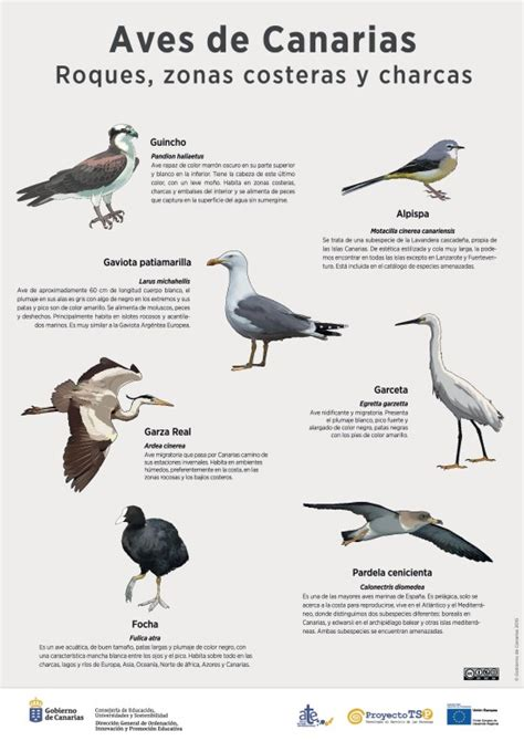 Lámina: Aves de roques, zonas costeras y charcas ...