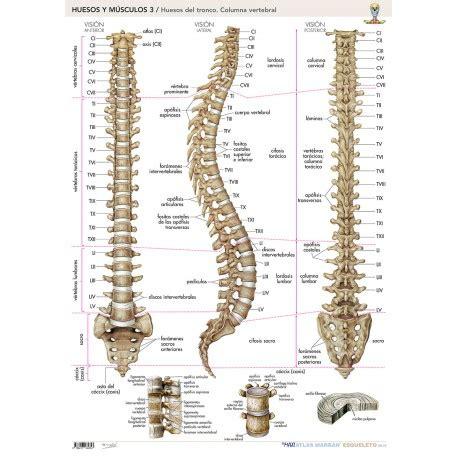 Lámina Huesos y Músculos Columna Vertebral | Marbán México