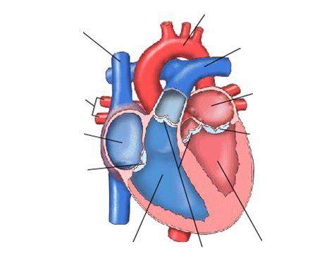 Láminas interactivas. Aparato circulatorio. El corazón.