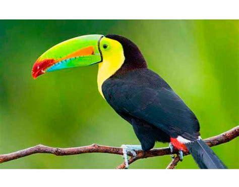 Las 10 aves exóticas más espectaculares