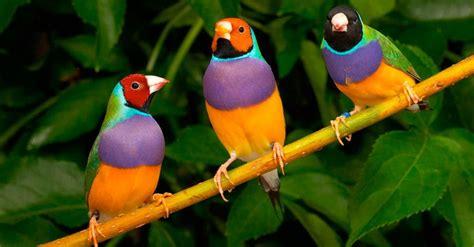 Las 10 aves exóticas más hermosas del mundo   e Consejos