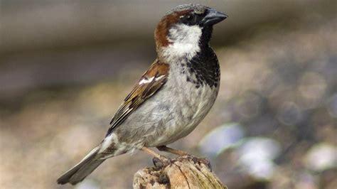 Las 10 aves más comunes de la CDMX · Experiencias · CDMX
