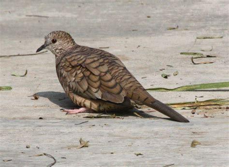 Las 10 aves más comunes de la Ciudad de México