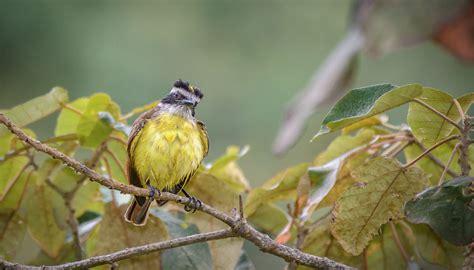 Las 10 aves más comunes del Valle de Aburrá | Esfera Viva