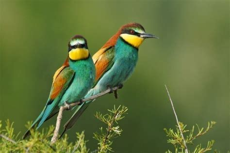 Las 10 aves más exóticas del mundo   Imágenes   Taringa!