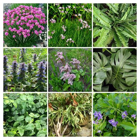 Las 10 especies que mejor funcionan en Jardines Verticales ...