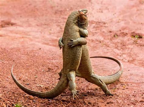 Las 10 fotos más divertidas del mundo animal   National ...