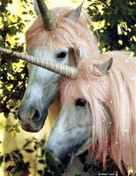 Las 10 mejores imágenes de unicornios reales | Unicornios ...