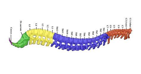 Las 11 principales enfermedades de la columna vertebral
