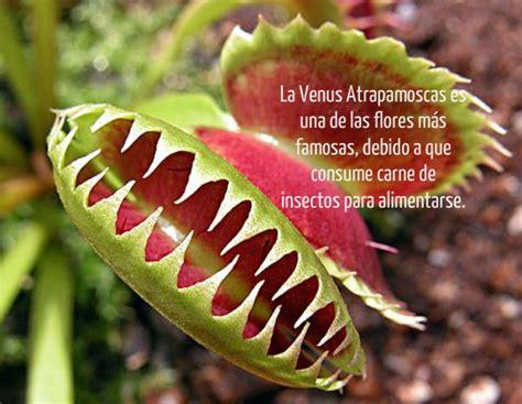 Las 13 flores y plantas más extrañas y curiosas del mundo ...