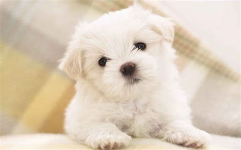 Las 15 mejores razas de perros para niños