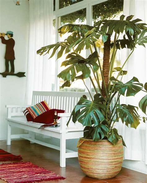 Las 20 plantas de interior más resistentes   Plantas de ...