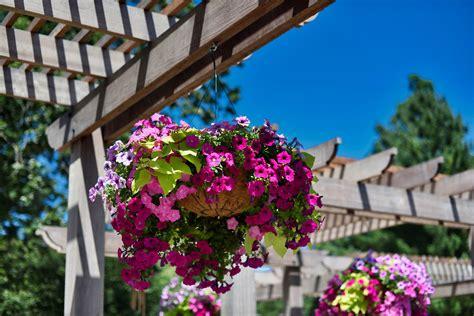 Las 5 plantas más resistentes para cultivar en el exterior ...