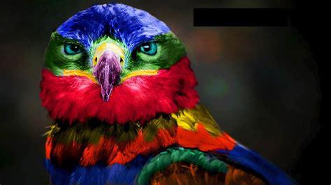 Las 6 Aves Más Exóticas Del Planeta   YouTube