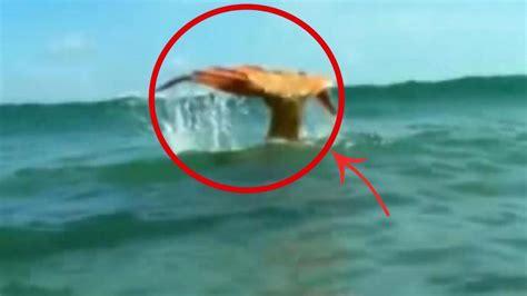 Las 6 Criaturas más Extrañas del Fondo del Mar que NO ...