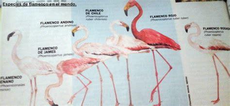Las 6 especies de flamenco en el mundo.