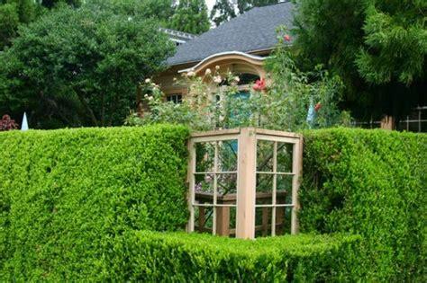 Las 7 coníferas más utilizadas como setos   Guia de jardin