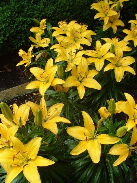 Las Angiospermas | Plantas & Jardín | Botánica Botany
