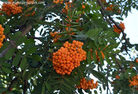 Las Angiospermas | Plantas y Jardín