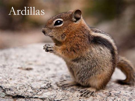 Las Ardillas1