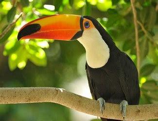 Las aves. Animales vertebrados.