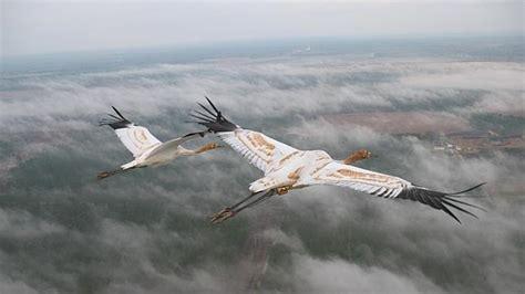 Las aves aprenden a emigrar