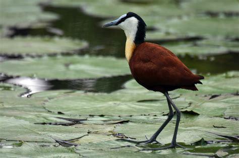 Las aves costeras prefieren un buen cuerpo a un cerebro ...