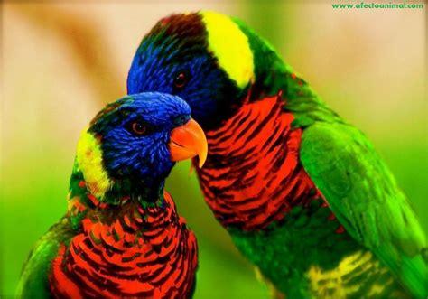 Las aves mas bonitas del planeta  MEGAPOST    Taringa!