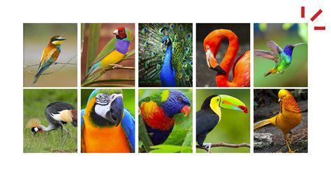 Las aves más bonitas del reino animal   Claro Pet