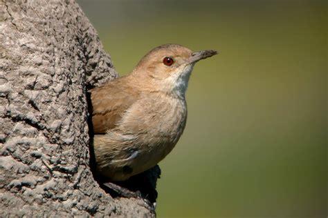 Las aves más comunes de parques y jardines de Buenos Aires ...