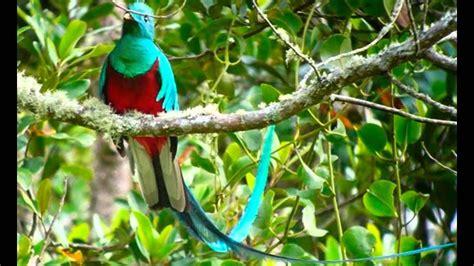 las aves mas hermosas de colombia   YouTube