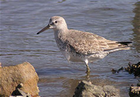 Las aves migratorias y las lagunas costeras