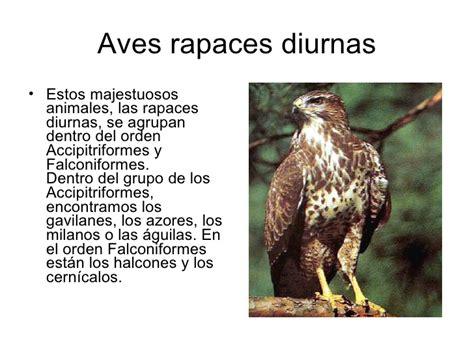 Las Aves Rapaces