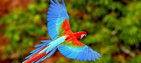 Las aves: una población exótica y diversa
