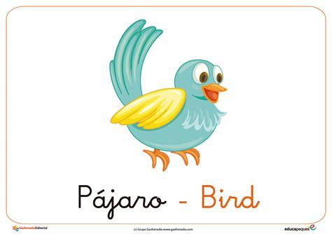 Las aves. Vocabulario en Castellano e inglés