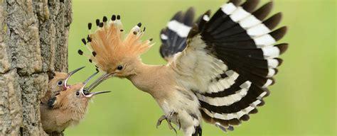 Las aves vuelven al teléfono móvil a través de la app más ...