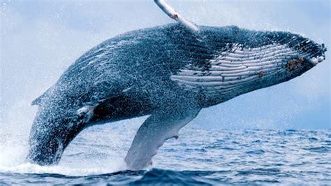 Las ballenas y la opera | Ciencia Marina y otros asuntos