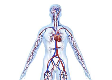 Las enfermedades del sistema circulatorio, principal causa ...