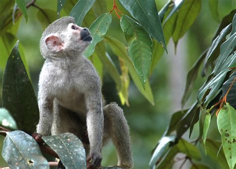Las especies de fauna deben ser prioritarias en los ...
