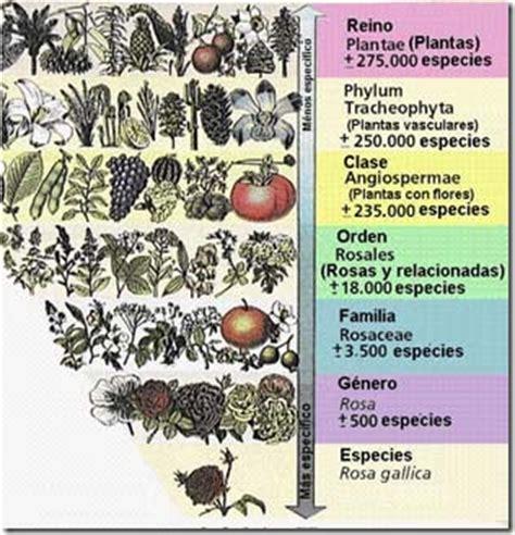 Las especies y la taxonomía | La guía de Biología