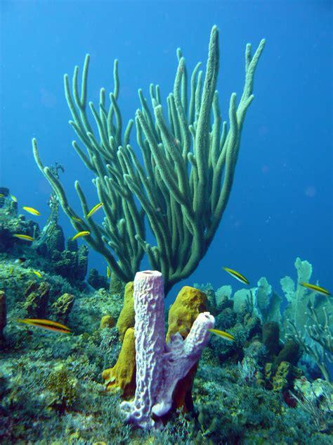 Las esponjas marinas reciclan los materiales nutritivos de ...