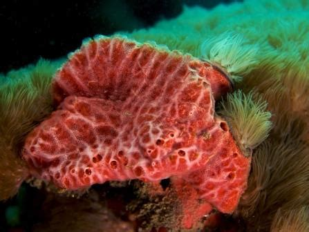 Las esponjas marinas son animales y otras curiosidades ...