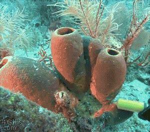 Las esponjas marinas son invertebrados y poseen la ...