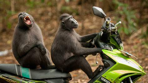 Las fotos de animales más graciosas del año te pondrán de ...