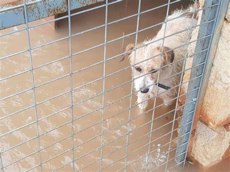 Las fuertes lluvias inundan la protectora de animales ...