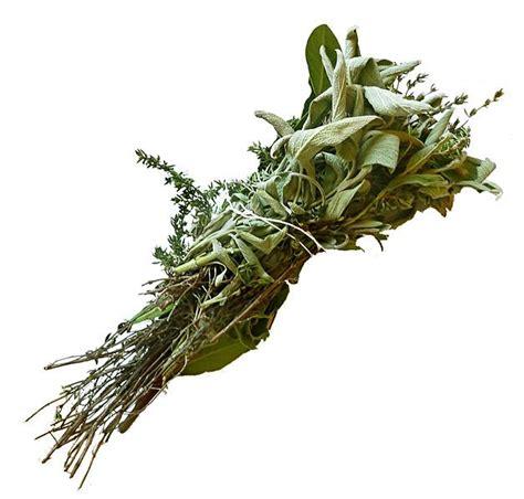 Las Hierbas o Plantas aromáticas, clasificación | Plantas ...