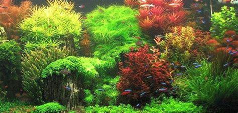 Las macetas en las plantas de acuario