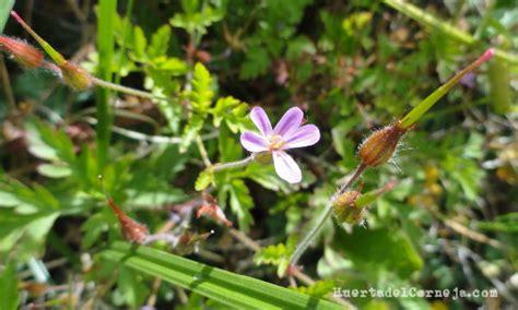 Las malas hierbas en la huerta   Huerta del Corneja