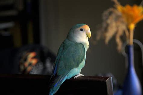 Las mejores aves para tener en casa